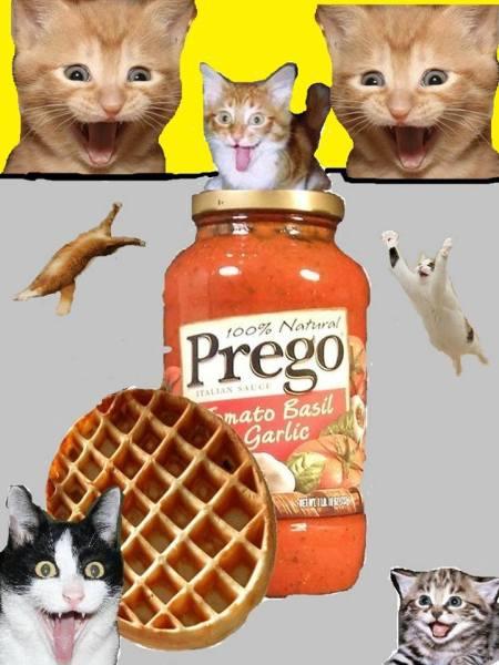 Cats eggo prego