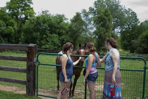 ranchhorse