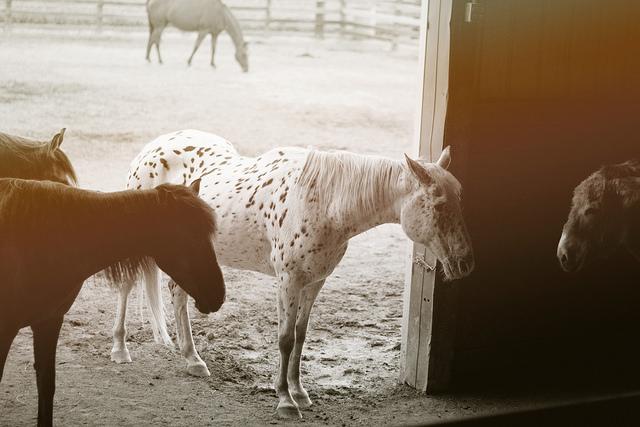 horseshowhorses